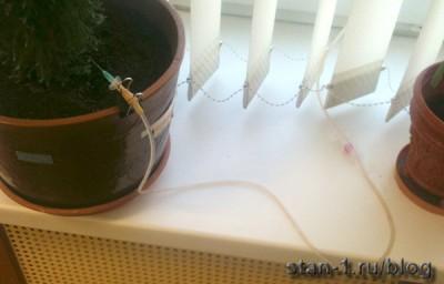 Автоматический полив комнатных растений из аппарата для переливания крови