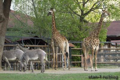 Африканская саванна в Московском зоопарке