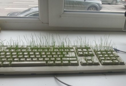 Трава в клавиатуре
